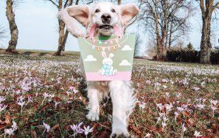 Trust the Dog Blog - Ostern