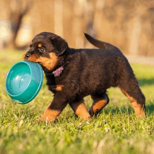 hundeerziehung spaltenbild