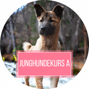 Junghundekurs bei Trust the Dog
