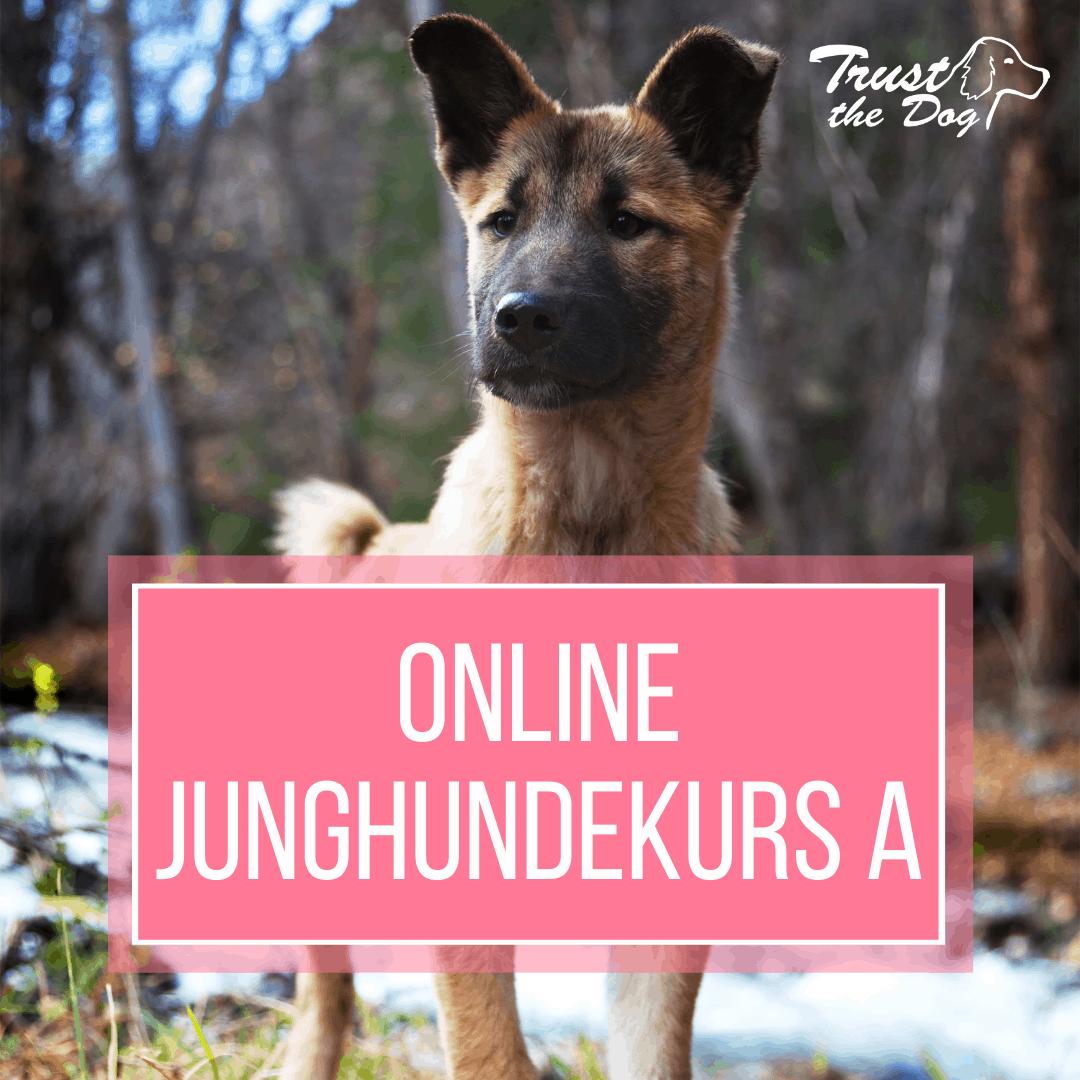 Junghundekurs bei Trust the Dog