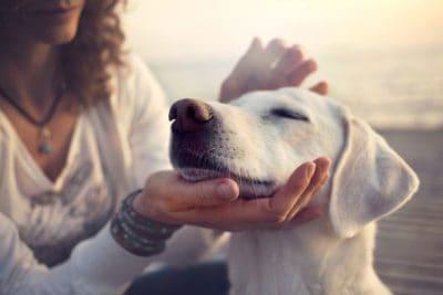 bild startseite entspannter hund