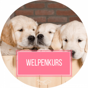 Online Welpenkurs Trust the Dog