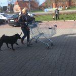 Einkaufen gehen trainieren mit dem Hunde im Basiskurs