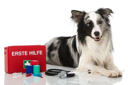 seminar-erste-hilfe-am-hund