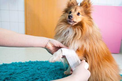 erste hilfe am hund erstversorgung
