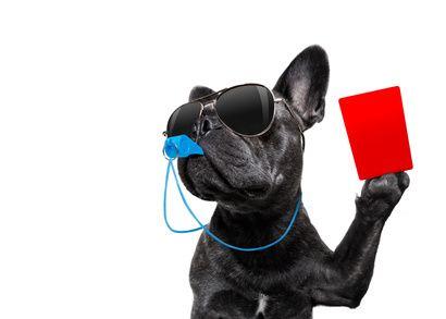 Anti-Giftköder-Training Hundeschule Nusse